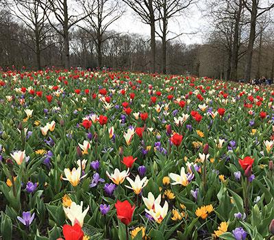 Keukenhof Ruigrok Flowerbulbs