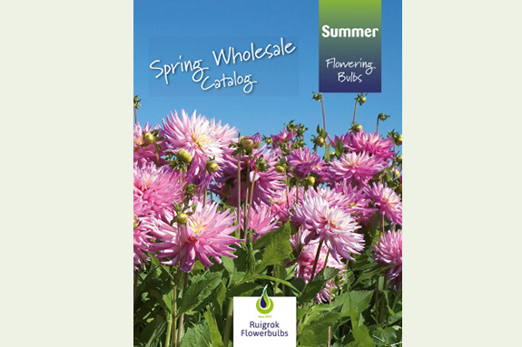 Spring Wholesale catalog