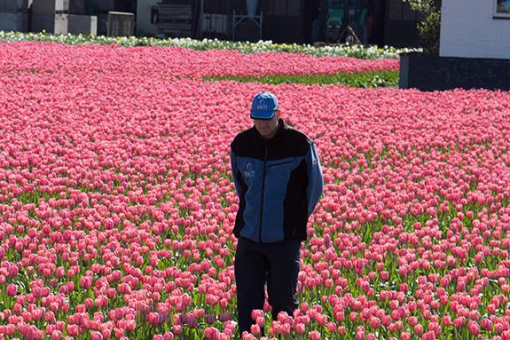 BKR Check | Ruigrok Flowerbulbs