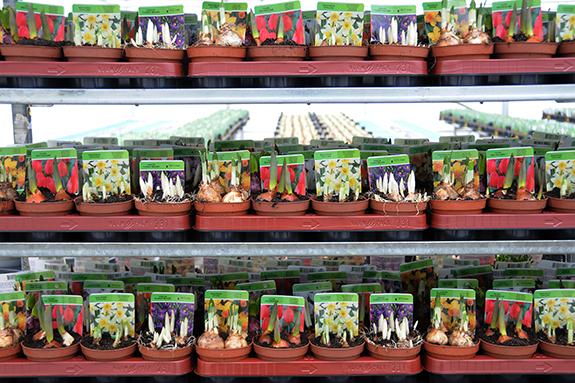 Greenhouse Program