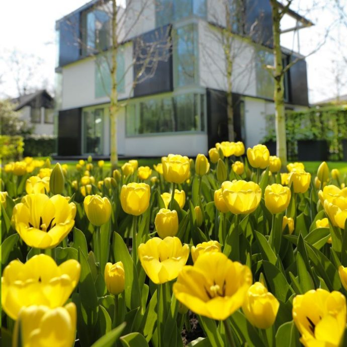 Tulipa Long-lasting Mixture 'All Season Yellow Mix'